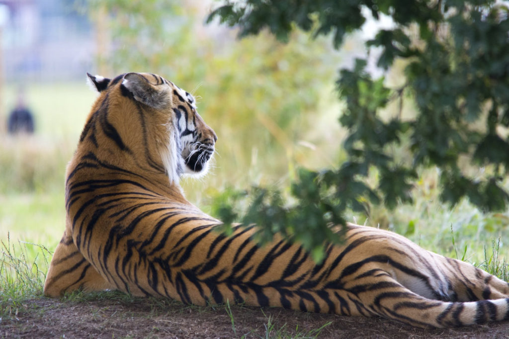 Sariska tiger reserve, the beautiful forest(1)